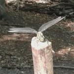 Die Waldfreunde entdecken eine Libelle